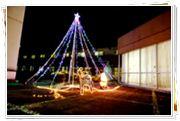 中庭のクリスマスツリー