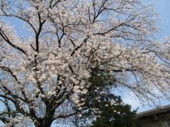 桜H28富士見園
