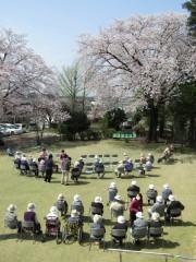 H28富士見園桜2